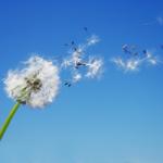 ¿Sabes cuáles son los síntomas de la alergia?