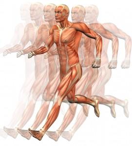 Correr es un ejercicio que quema muchas calorías gracias a que en él intervienen muchos músculos de nuestro cuerpo
