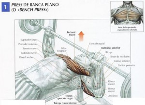 Postura y músculos implicados en el press de banca
