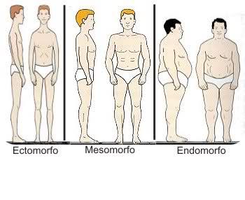 Tipos somáticos: ectomorfo, mesomorfo y endomorfo